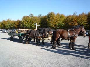 Herbstausfahrt 2011
