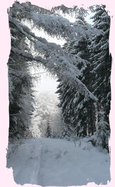Sauerländer Winterwald